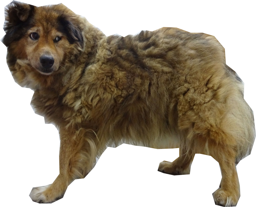 毛玉が多くて暑そうな犬